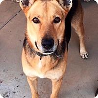 Adopt A Pet :: Sawyer - Scottsdale, AZ