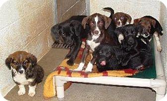 Hound (Unknown Type) Mix Puppy for adoption in Wetumpka, Alabama - #72271