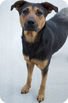 Shepherd (Unknown Type) Mix Dog for adoption in Prince George, Virginia - Ruby