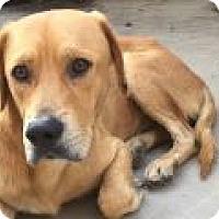Adopt A Pet :: Milo - Denver, CO