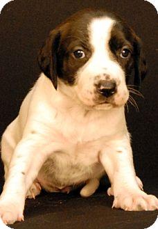 Hound (Unknown Type) Mix Puppy for adoption in Newland, North Carolina - Brooks