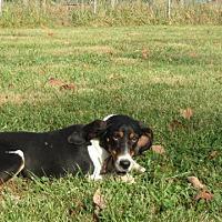 Adopt A Pet :: Emily - Pleasant Plain, OH
