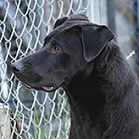 Adopt A Pet :: Taffy - Jarrell, TX