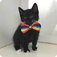 Adopt A Pet :: Fez - Houston, TX