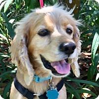 Adopt A Pet :: Harley - Sugarland, TX