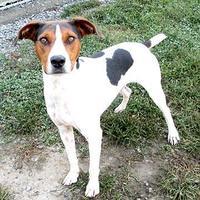 Adopt A Pet :: Junior - Fayetteville, TN