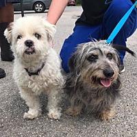 Adopt A Pet :: Patsy and Sadie/MS - Columbia, TN