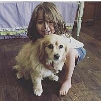 Adopt A Pet :: Jovi - BONITA, CA