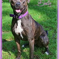 Adopt A Pet :: Shelly - Shippenville, PA