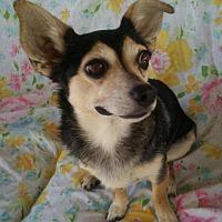 Adopt A Pet :: Shiloh - Mission viejo, CA