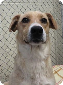 Beagle Mix Dog for adoption in Kalamazoo, Michigan - Diamond