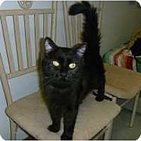 Adopt A Pet :: Beatrice - Hamburg, NY