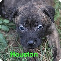 Adopt A Pet :: Houston - Bloomsburg, PA