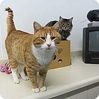 Adopt A Pet :: Arvin - Kingston, WA