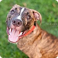 Adopt A Pet :: Julius - Reisterstown, MD