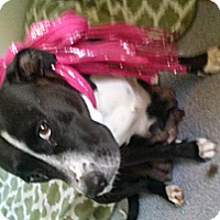 Adopt A Pet :: Suzie Q - Marlton, NJ