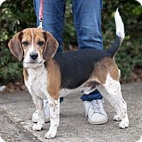 Adopt A Pet :: Sam - Kingwood, TX