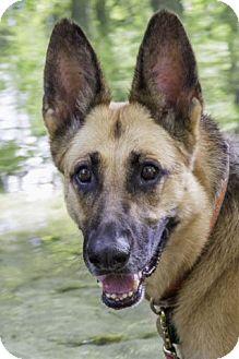 German Shepherd Dog Dog for adoption in Wayland, Massachusetts - Miyah