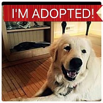 Great Pyrenees Mix Dog for adoption in Regina, Saskatchewan - Molly