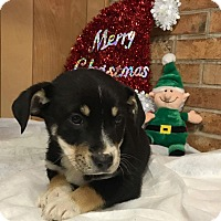 Adopt A Pet :: Fuzzy pups - Pompton Lakes, NJ