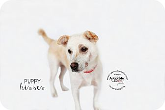Terrier (Unknown Type, Small) Mix Dog for adoption in Sherman Oaks, California - Dixie
