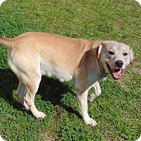 Adopt A Pet :: Zara - Lufkin, TX