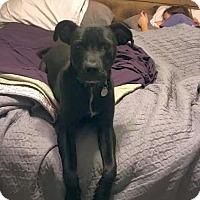 Adopt A Pet :: Toby - Huntsville, AL