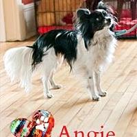 Adopt A Pet :: Angie - Ottawa, ON