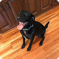 Adopt A Pet :: Oden - Woodstock, GA