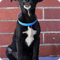 Adopt A Pet :: Eagle - Waldorf, MD