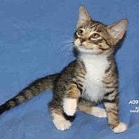 Adopt A Pet :: *COKE - Hanford, CA