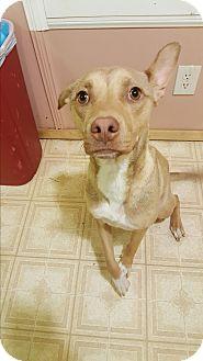 Labrador Retriever Mix Dog for adoption in Victorville, California - Buttercup