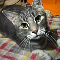 Adopt A Pet :: Zane - Ridgecrest, CA