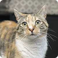 Adopt A Pet :: Edie - Whitehall, PA