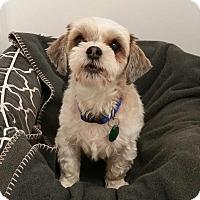 Adopt A Pet :: Jazzmin Turner - Urbana, OH