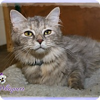 Adopt A Pet :: Whispurr - Shippenville, PA