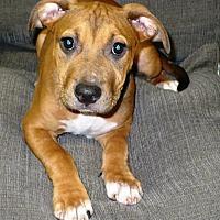 Adopt A Pet :: Daffy - Eastpoint, FL