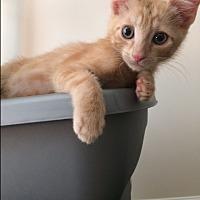 Adopt A Pet :: Pico - Richmond, VA