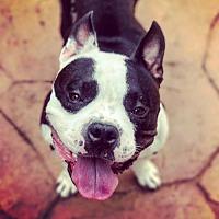 Adopt A Pet :: Chunk - Denton, TX