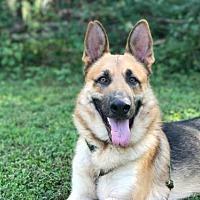 Adopt A Pet :: Roman - Morrisville, NC