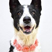 Adopt A Pet :: Sophie - Dublin, CA