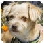 Photo 1 - Poodle (Miniature) Mix Puppy for adoption in Berkeley, California - Archie