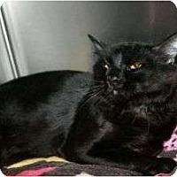 Adopt A Pet :: Earl - Canoga Park, CA