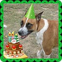 Adopt A Pet :: Elmo - Copperas Cove, TX