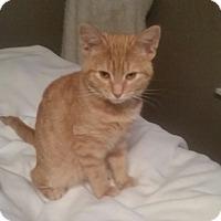 Adopt A Pet :: Morris
