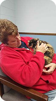 Domestic Mediumhair Kitten for adoption in Albemarle, North Carolina - Lucy Hayes