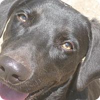 Adopt A Pet :: Charlie - Harrisburgh, PA
