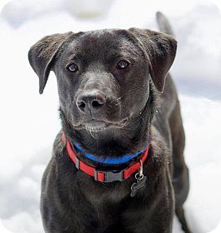 Labrador Retriever Mix Dog for adoption in North Haven, Connecticut - Elle
