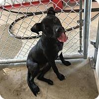 Adopt A Pet :: Eclipse - Kirby, TX