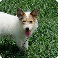 Adopt A Pet :: TASHA - Brattleboro, VT
